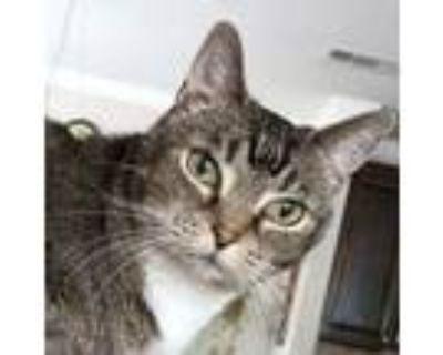 Adopt Mama Kitty a Domestic Short Hair