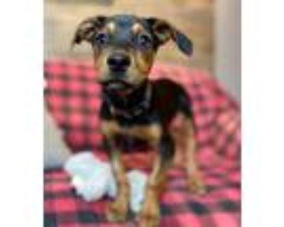 Adopt Gator a Mixed Breed (Medium) / Mixed dog in Park City, UT (31996029)