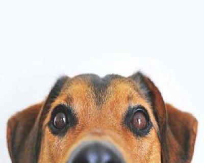 Sandy Mobile Pet Grooming