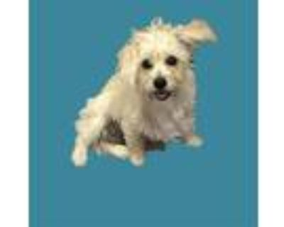 Adopt *MILO a White Terrier (Unknown Type, Medium) / Mixed dog in Long Beach