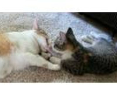 Adopt Daphne and Kitten, Elsa a Calico