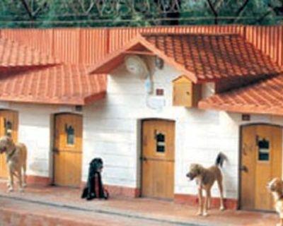 Dog Boarding service in Washington
