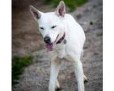 20-114 Latte, Labrador Retriever For Adoption In Hampton, Virginia