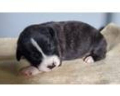 Adopt Maleficent Puppies a Mixed Breed