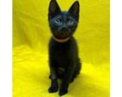 Lulu, Domestic Shorthair For Adoption In Alameda, California