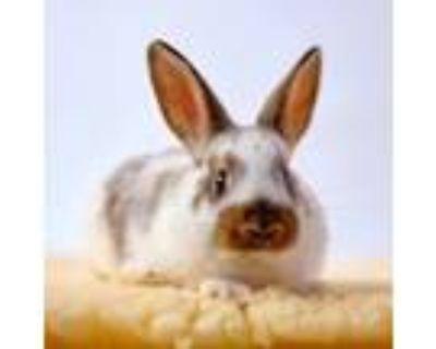 Adopt Quimby a Bunny Rabbit