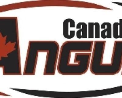 Canadian Angus Association 29...