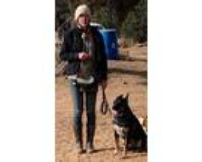 Adopt Michelangelo a Shepherd, Australian Cattle Dog / Blue Heeler