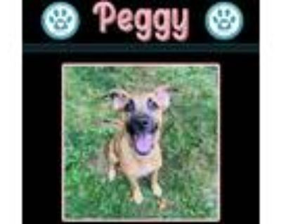 Adopt Peggy 072421 a Tan/Yellow/Fawn - with White Pit Bull Terrier dog in