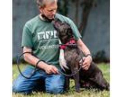 Tikka, Pit Bull Terrier For Adoption In Oakland, California