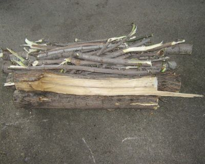 Maple Wood (Firewood/Carving/Projects?)