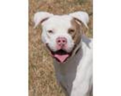 Adopt Ghost1 a White - with Tan, Yellow or Fawn Terrier (Unknown Type