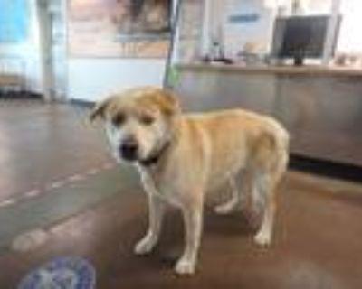 Adopt GUNTHER a Tan/Yellow/Fawn Mixed Breed (Medium) / Mixed dog in Van Nuys