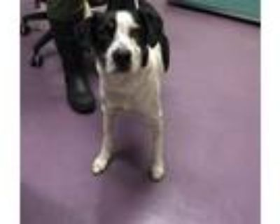 Adopt ROCKY a Border Collie, Mixed Breed