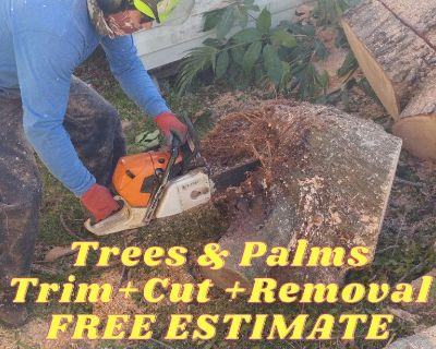 Trees & Palms Trim Cut Removal Miami