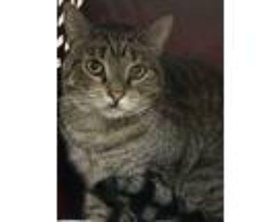 Treat Kitty, Domestic Shorthair For Adoption In Sherman Oaks, California