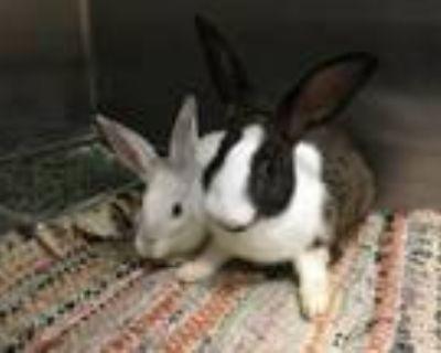 Adopt LOLABUN a Bunny Rabbit