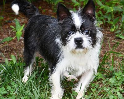 Fendy 11070 - Mixed Breed (Small) - Adult Male