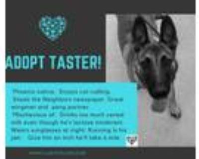 Adopt Taster a Belgian Malinois / Mixed dog in Tucson, AZ (30221640)