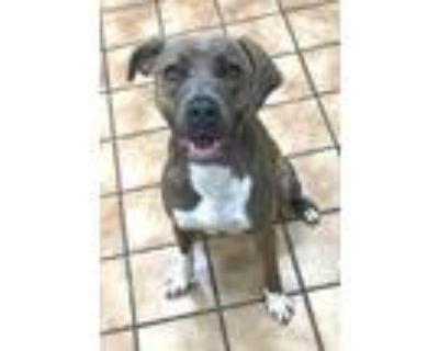 Adopt MAISY a Labrador Retriever, Mixed Breed