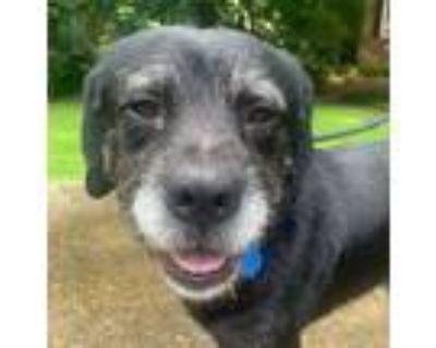Adopt JT a Terrier, Labrador Retriever