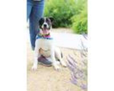 Adopt Fiona a Boxer / Mixed dog in Albuquerque, NM (31624843)