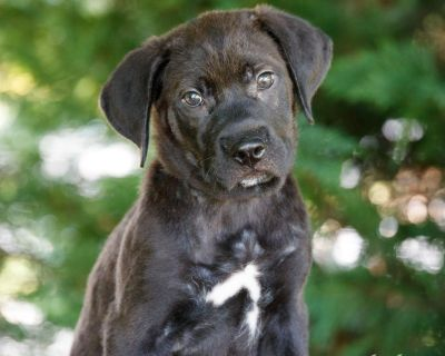 Graham 11102 - Mixed Breed (Large) - Puppy Male