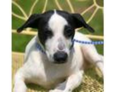Younie, Terrier (unknown Type, Small) For Adoption In New Iberia, Louisiana