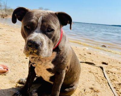 EMERGENCY 🆘 LOST or STOLEN SERVICE DOG PLEASE HELP