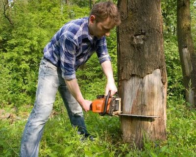 Tree Removal Service in Sioux Falls SD - Sioux Falls Tree Care