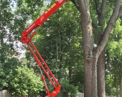 DOS Tree Service excellence in tree care