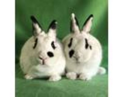 Adopt Draco and Ursa a Bunny Rabbit