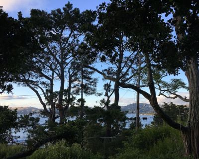 Serene Sausalito One-Bedroom In-law unit 20 minutes from San Francisco - Sausalito
