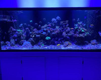 220 Reef Ready Marineland Aquarium and Stand
