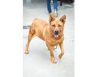 Adopt Gracie a Mixed Breed