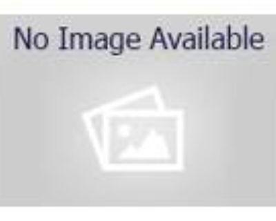 Adopt BRONCO a Black Border Collie / Mixed dog in Denver, CO (32117968)