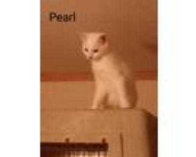 Adopt Pearl a White American Shorthair (short coat) cat in Aylett, VA (32248109)