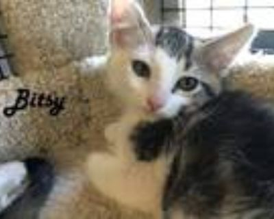 Adopt Whis-Purr Kittens in 'Emmy's Cage' - Bittles, BooBoo, BoBo, Binky