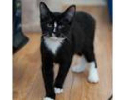 Adopt Della a All Black Domestic Shorthair / Mixed cat in Buffalo, NY (31490132)