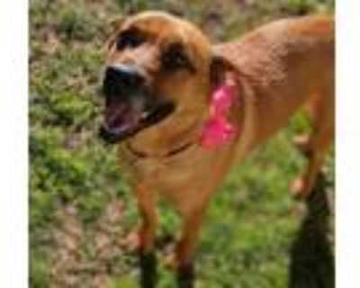 Adopt Peach - Special Needs a Tan/Yellow/Fawn Shepherd (Unknown Type) / Chow