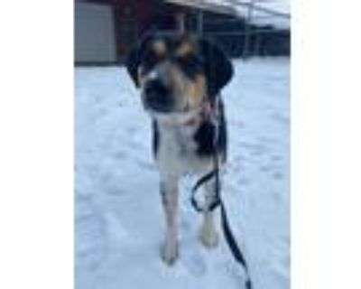 Adopt Spike a Mixed Breed