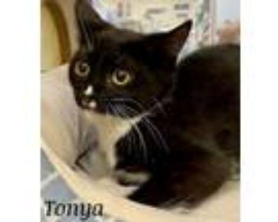 Adopt Tonya a Domestic Short Hair