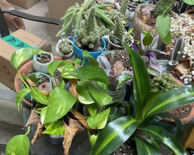 Misc house plants