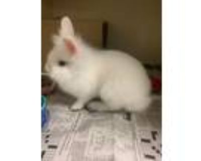 Adopt Helena a American Fuzzy Lop