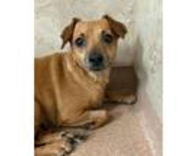 Adopt Octavia a Terrier (Unknown Type, Medium) / Mixed Breed (Small) / Mixed dog