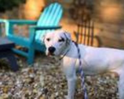 Adopt Jeffers a White Mixed Breed (Large) / Mixed dog in Chamblee, GA (32448145)