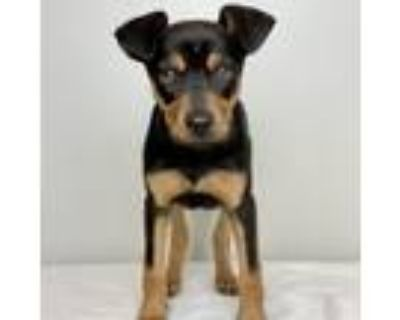 Adopt Betty Paige a Black Mixed Breed (Medium) / Mixed dog in Palm Springs