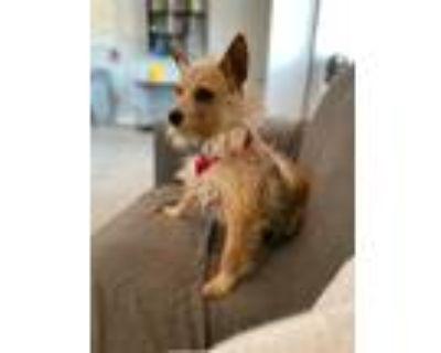 Adopt Yogi a Mixed Breed (Medium) / Mixed dog in Park City, UT (32123891)