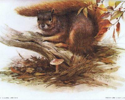 Red Squirrel Litho - James R. Smith, Artist - 1979 - Unframed