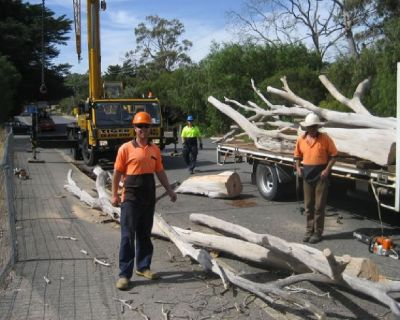 Tree Pruning Adelaide - Sturt Stump Cutters